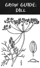 Grow Guide Dill