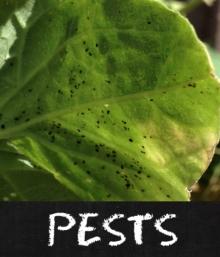 Pests Pickles Of Wisdom