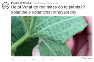 Twitter Post Pickles Of Wisdom