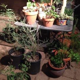 Error 404: Plants Not Found. - Winter Protection Program