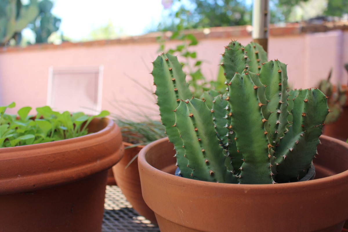 Gifting: How To Choose A Succulent For Your Plant-Loving Friend