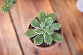 succulent-for-how-to-choose-a-plant