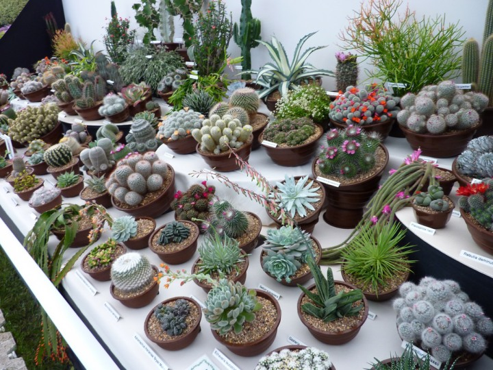 succulent-table