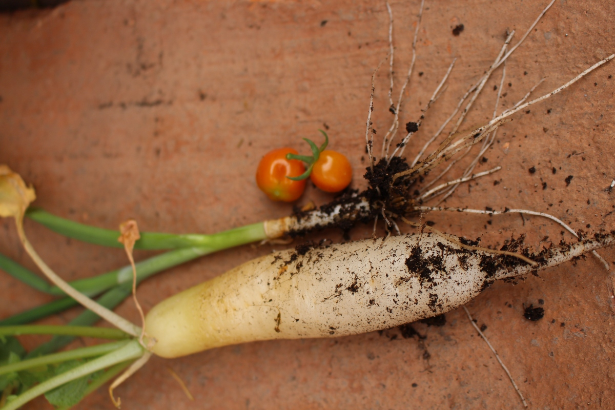 Should You Clean Your Garden And Store-Bought Vegetables Before Eating Them?