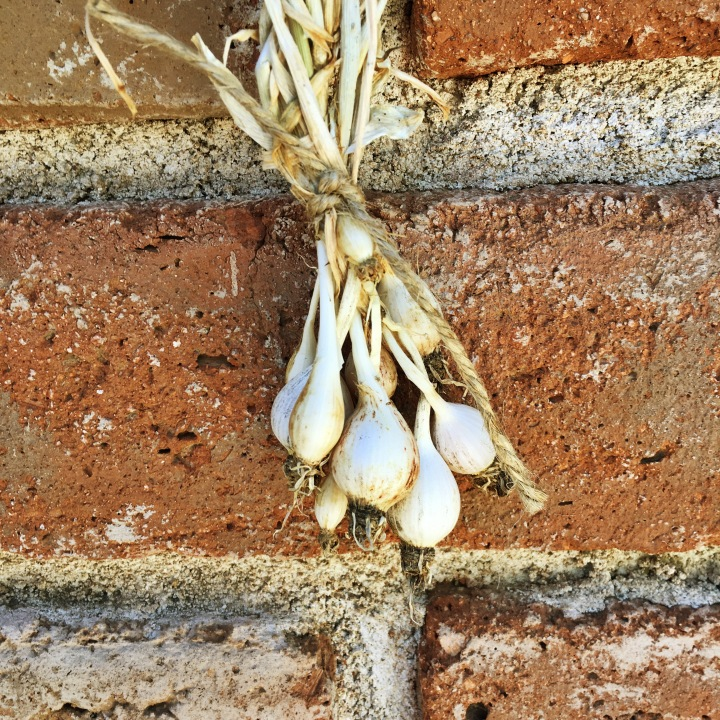 how to grow garlic from the tiny cloves in the middle of the garlic bulb